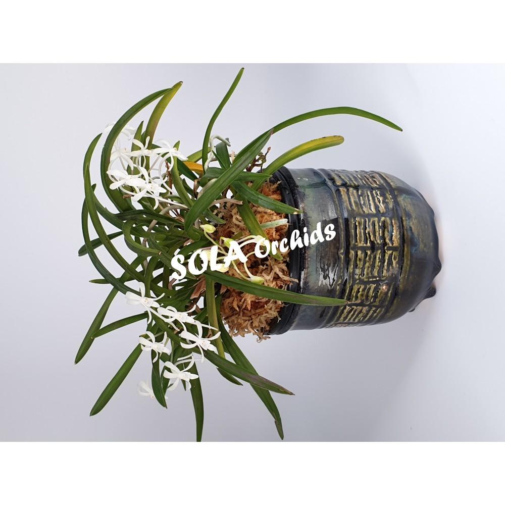 Кашпо- дисплей для миниатюрных растений, пр- во Россия