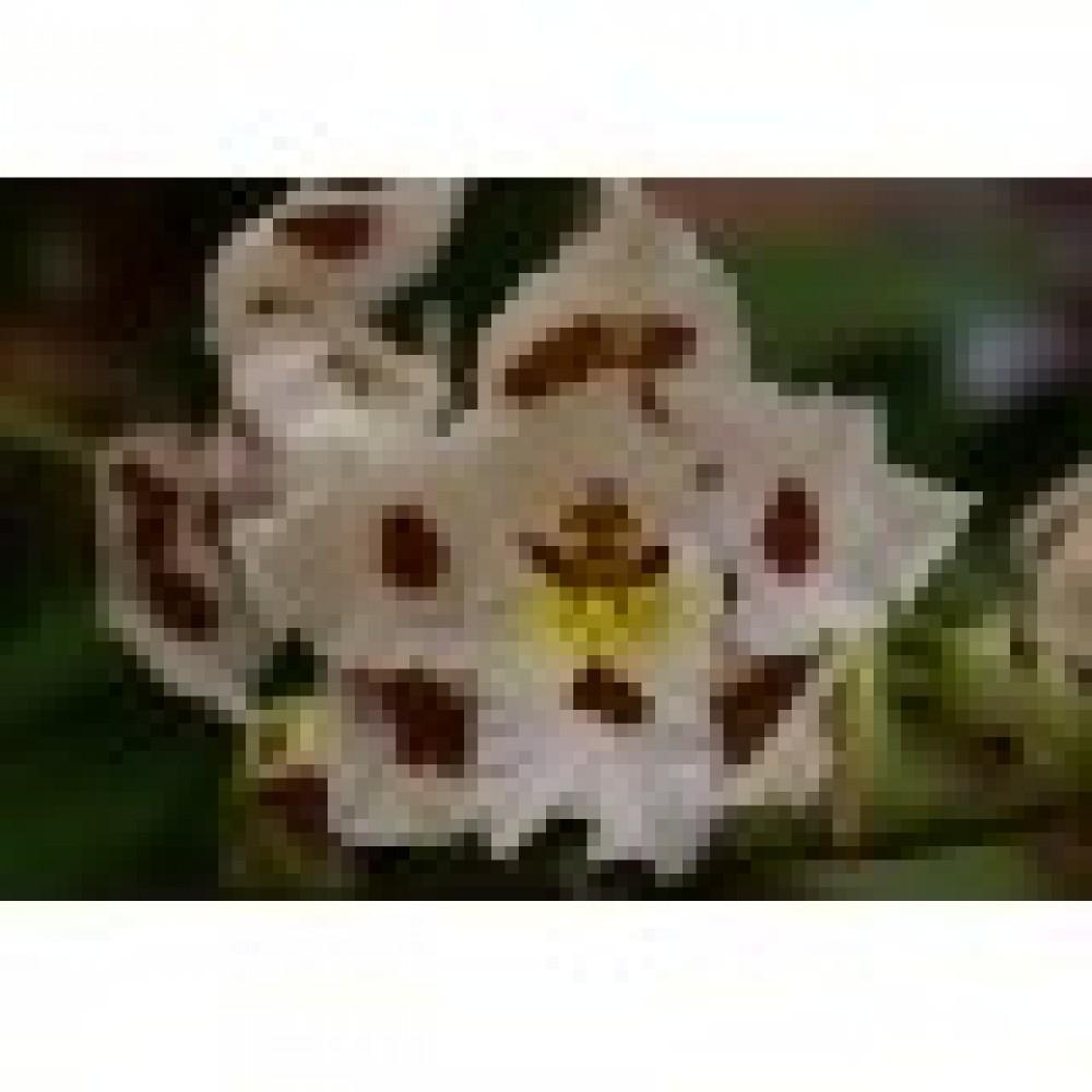 Фотоконкурс «Орхиата и Спагмосс: новая жизнь орхидеи»