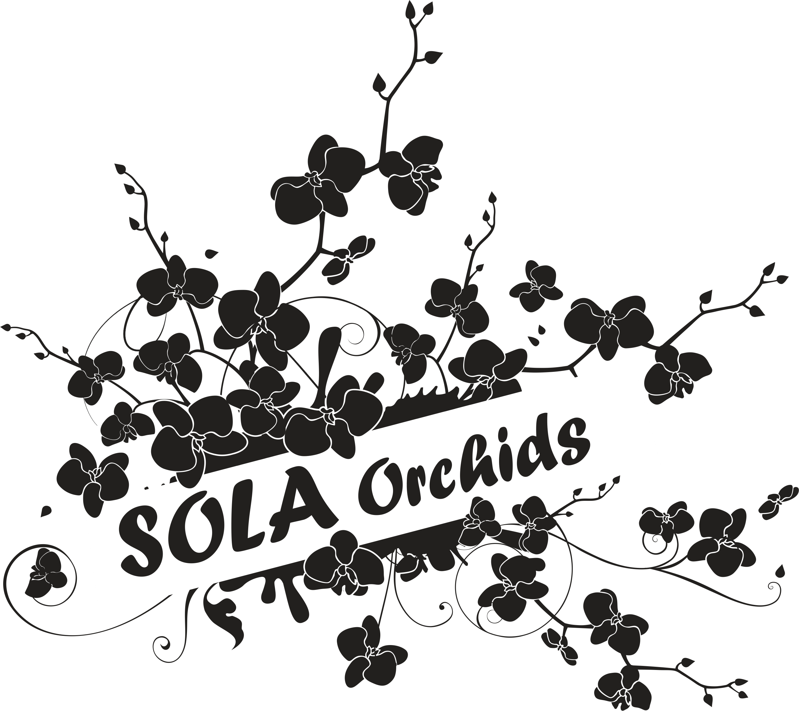 SOLA Orchids